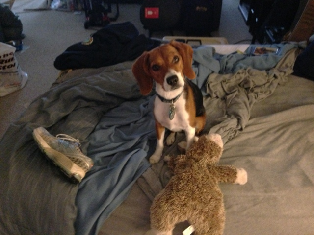 Lessons From The Beagle